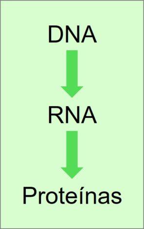 Resumo da teoria da evolução de Darwin, mostrando que os genes determinavam nossa vida.